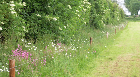 Pollinator Field Margin