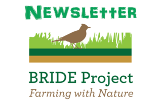 BRIDE-Newsletter