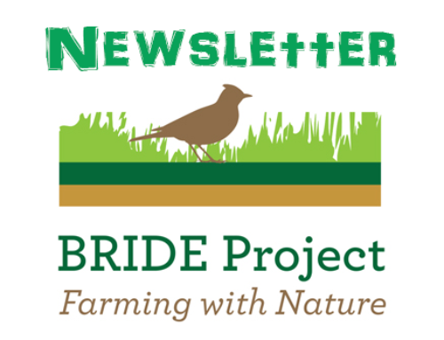 Bride Project Newsletter May 2019