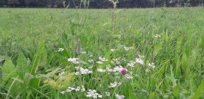 Multi-species Grassland